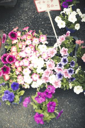 Hatsukari_20110028